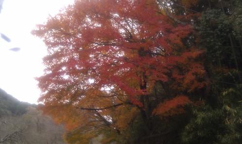 月ヶ瀬の紅葉