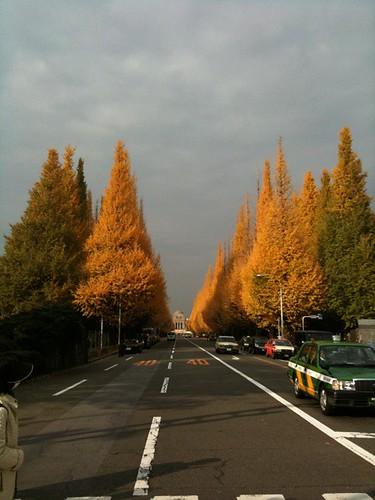 青山の銀杏並木なう。結構葉っぱが落ちていますね。