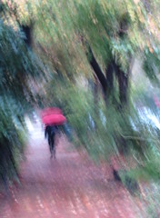 The Red Umbrella (Kurlylox1) Tags: autumn trees red woman storm blur fall leaves rain umbrella falling slanted hardrain sheetsofrain
