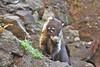 México - Naturaleza / Nature (Galeon Fotografia) Tags: tejon tier tierwelt hayop animal животное ζώο animale natur nature naturaleza природа kalikasan mexico мексика méxico メキシコ μεξικό mexique messico galeónfotografía