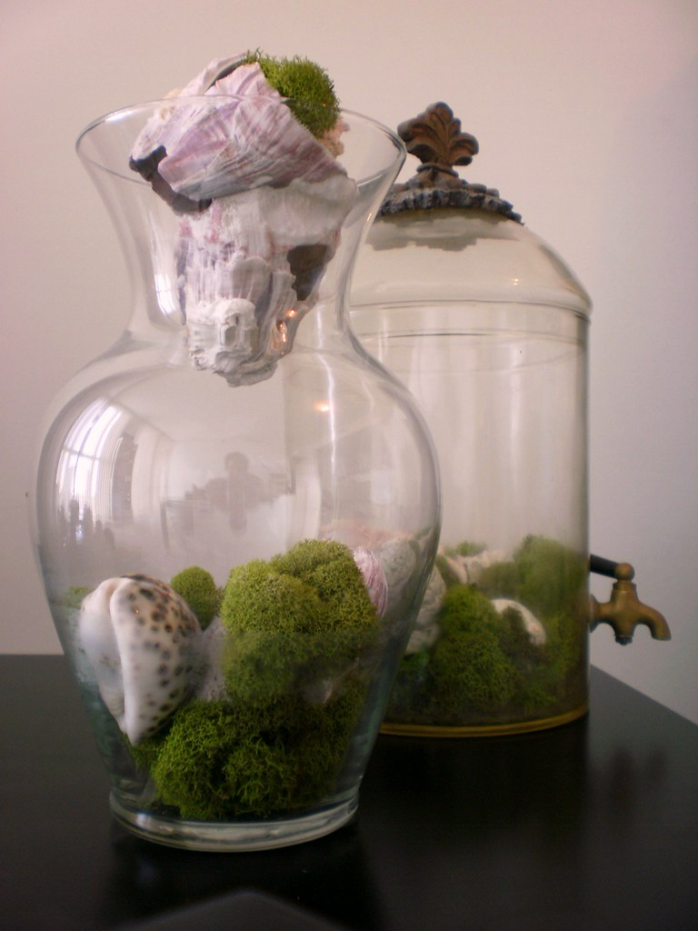 Glass, Moss & Seashells