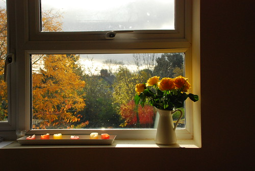 Autumn from my window