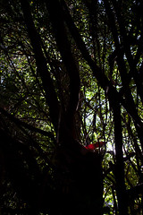 Getting strong with character | 101205-7638-jikatu (jikatu) Tags: tree hoja canon garden uruguay leaf nikon jardin nikkor afs maldonado puntadeleste wideanglezoom 1424mm nikon1424 1424mmf28 nikon1424mmf28g canon5dmkii nikon1424mmf28gedafs jikatu baikovicius