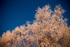 Frozen 2 (hmluker) Tags: trees winter sky snow oslo norway canon 2470l canon7d coldstmarka