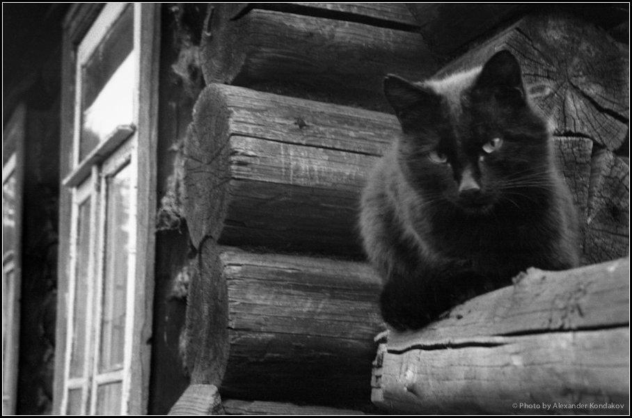 BLACK CAT 1986 © Photo by Alexander Kondakov