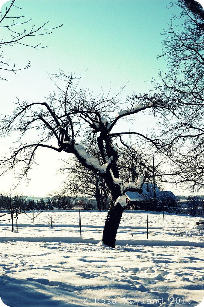 Snow Veyrier 2.2 bis