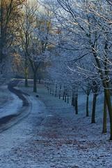 Frosty Kelvingrove Park, Glasgow (Ellie_M) Tags: trees winter snow cold fall leaves frost december glasgow footpath 2010 kelvingrovepark