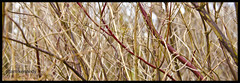 Branching Out / 265 of 365 (Adam Kennedy Photography) Tags: trees winter adam project countryside bush nikon branches blackburn 365 bushes kennedy thick vr tockholes 18105mm d7000