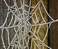 Encrusted (Kitty W) Tags: white ice fence garden frost cobweb spidersweb encrusted frostyweb
