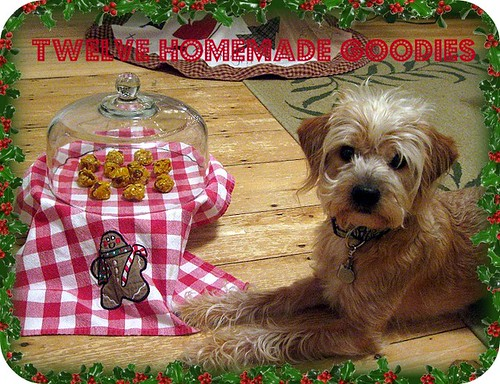 On The Twelth Day Of Petmas..
