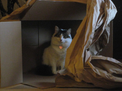 Faraday loves his box.
