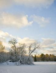 20101114_10133b (Fantasyfan.) Tags: old blue winter sky snow field sunshine topv111 tag3 taggedout clouds tag2 peace tag1 battle calm silence siikajoki fantasyfanin siirretty