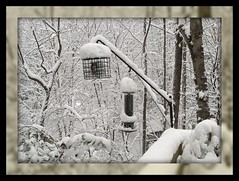 AN AL FRESCO, SIT-DOWN BUFFET . . . (NC Cigany) Tags: trees winter snow cold birds nc seed northcarolina thesouth feeders