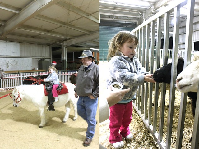 Pony Rides and Feeding Sheep