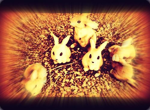 dream rabbits