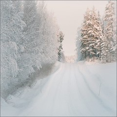A Day Before Tomorrow (Olli Keklinen) Tags: road trees winter light white snow color field photoshop suomi finland square landscape nikon scenery gettyimages 2010 d300 500x500 ok6 ollik 100commentgroup 20101229