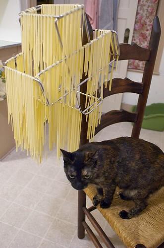pasta kitty