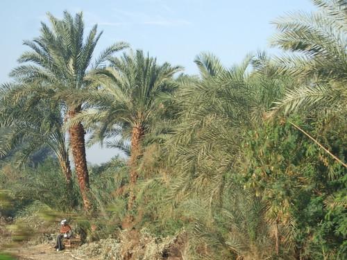 Lush West Bank