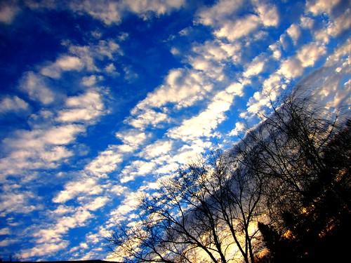 フリー写真素材, 自然・風景, 空, 雲, 樹木, アメリカ合衆国,