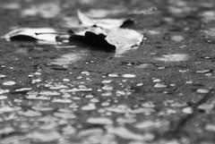 When the Rain Falls... (Mar*~) Tags: street winter bw cold water leaves rain out hojas outside blackwhite leaf drops lluvia agua eau wasser dof rainyday floor pov chuva pluie h2o gotas invierno acqua frío pioggia aigua goutte raindrop suelo blanconegro pretobranco goccia chuvia pluja blancnoir estatardevillover ātl