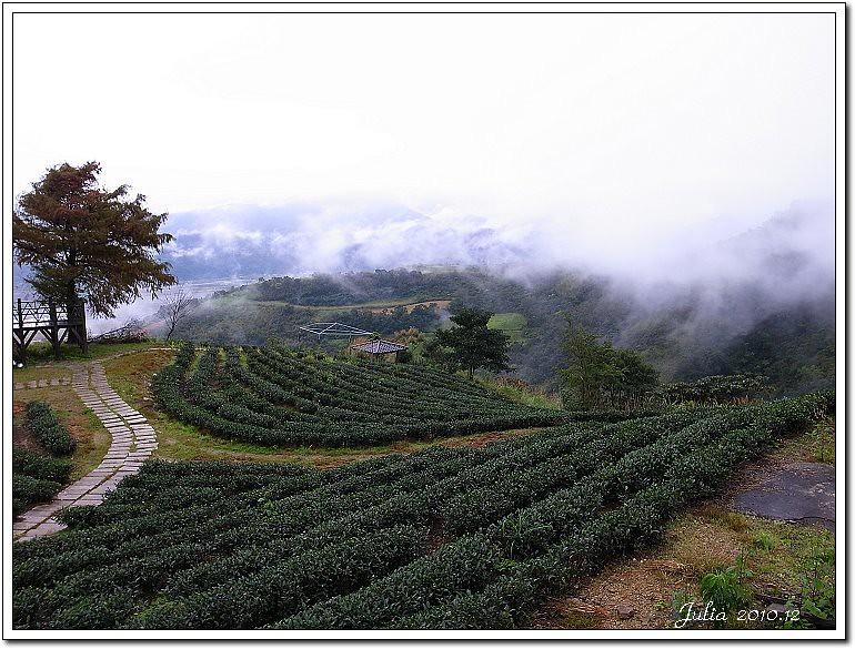 玉蘭茶園 (4)