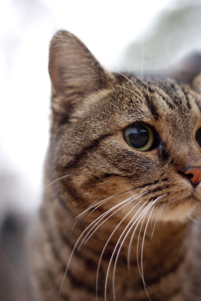 205: The Cat