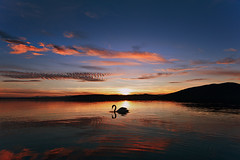 Swan in a sunset lake (Nick-K (Nikos Koutoulas)) Tags: sunset lake greek swan nikon nikos greece reflexions f4 vr nickk  kastoria 1635mm    d700    gvr1 koutoulas  mavrochori  mavroxori