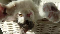 Miaou 8/9 janvier 2011 (petitewebfleur) Tags: