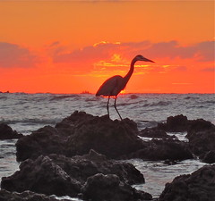 Firebird (jurvetson) Tags: sunset orange heron phoenix silhouette mexico firebird