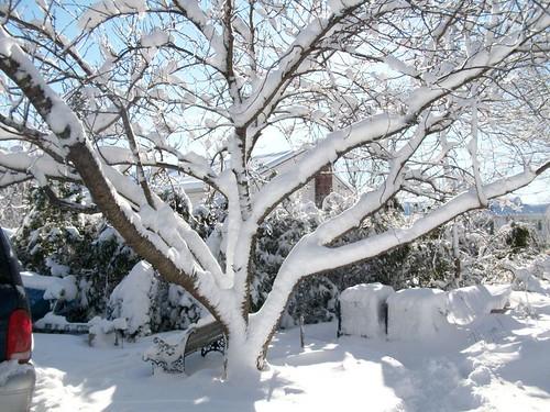 winter2011 025