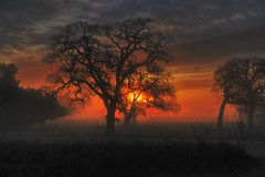 Oaks at Dawn (buffalo_jbs01) Tags: california calero sunrise dawn oaks bestinthewest supershot flickraward d3s nikonflickraward bestcapturesaoi