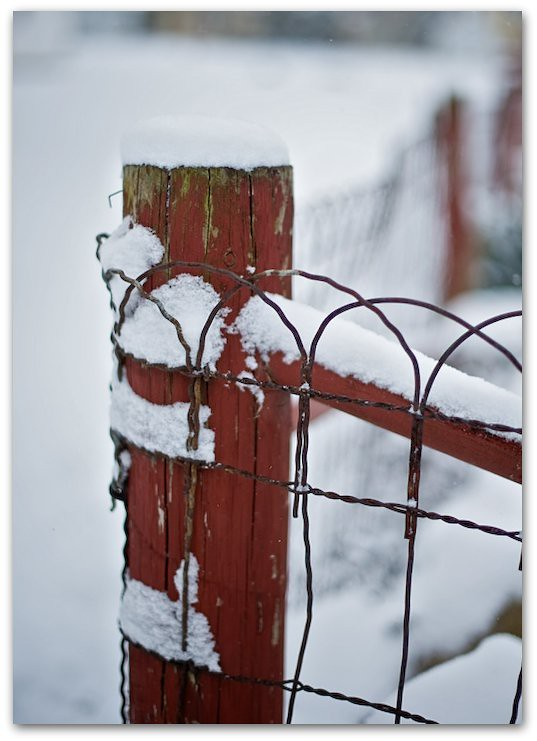 red fence snow