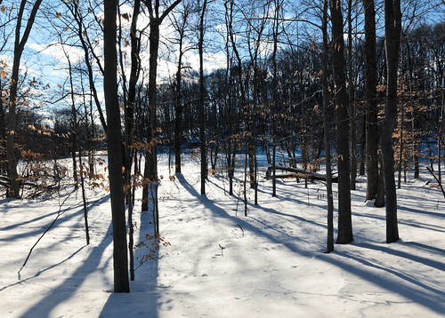 The Woods [Winter 2011]