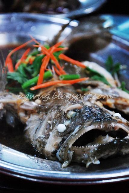 Ferocious Fish!