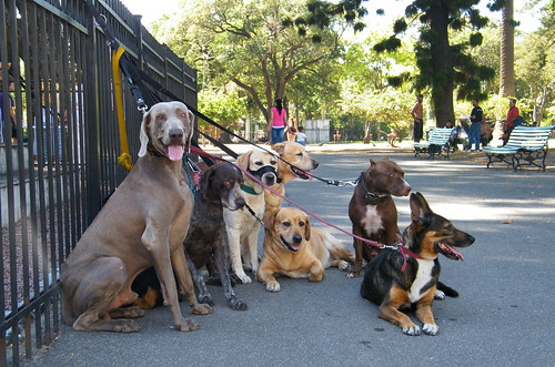 Dogs in Parque Lezama, San Telmo, Buenos Aires, Argentina by katiemetz, on Flickr