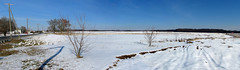 SNOW GEESE!!! (zxgirl) Tags: winter panorama snow cold bird field birds animal animals geese nj aves goose waterfowl anser animalia chen s5 new anatidae jersey snowgoose anseriformes ansercaerulescens chencaerulescens cabbagefield bluegoose chordata img2625 img2626 img2622 img2624 img2627 nj012011