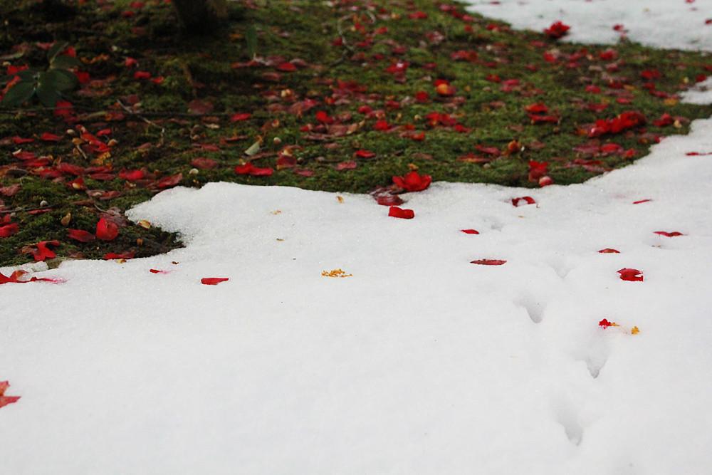 雪と落ち葉と足跡と