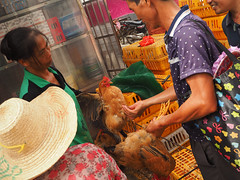 selling hens 2 (1) (anwoody) Tags: for flickr xingping china market streetlife