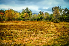 (Joshua Wells Photography) Tags: forest waterfall subaru landscape mountains vermont newyork waterfalls milky impreza wrx sti couple forester outback legacy fall fallcolors daytrip blackandwhite cloudy robertfrost trail poems poets house cabin