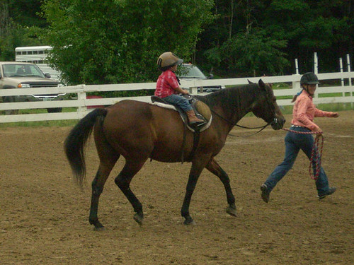 Steeldust Lesson Horses