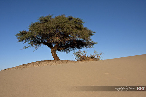 lone_tree_in_sahara_desert