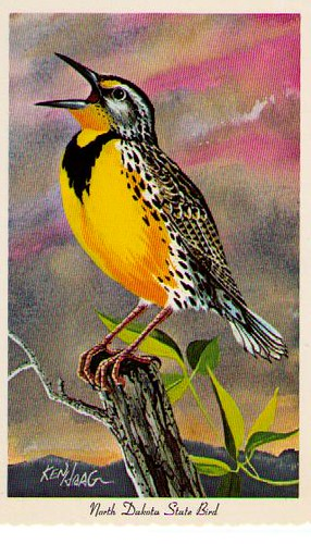 Wyoming State Bird--Western
