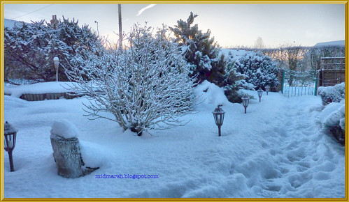 Snowy Garden 2