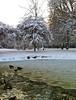 Frozen pond in Pearson Park