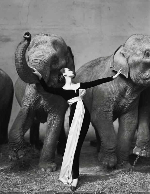 Dovima con Elefantes, 1955