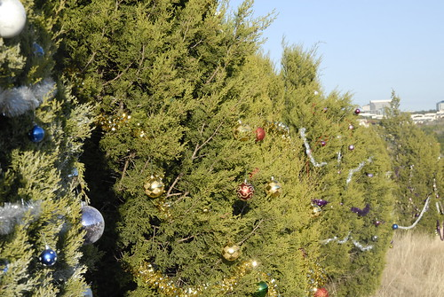 360_Trees_2010_066