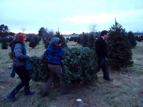we found our tree