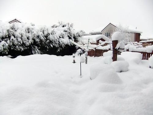 snowy back garden