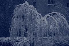 IMG_6413 (pellegrini_paris20) Tags: snowflake schnee white snow paris canon eos flake neige weiss blanc ville flocons flocon itsnows flocke flocken schneeflocke schneit flocondeneige souslaneige esschneit floconsdeneige ilneige 1000d
