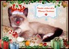 Meowy Christmas ... (FurBabyLuv *Finally back Online) Tags: